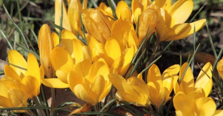 Photo of Planter og blomster