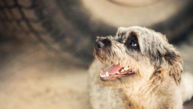 Photo of Find billige hundeartikler på nettet