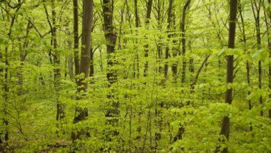 Photo of Tag på en anderledes tur i skoven